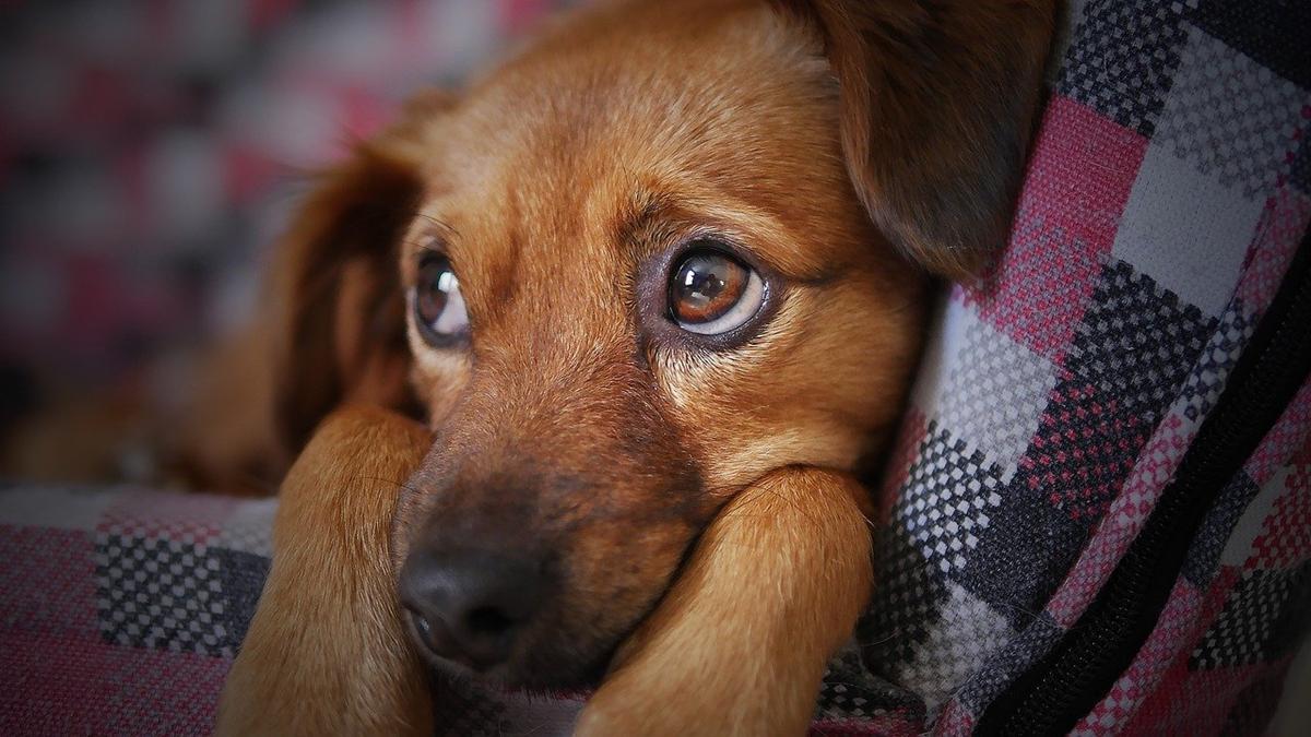 Jak zadbać o bezpieczeństwo naszego zwierzaka?